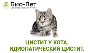 Цистит у кота. Идиопатический цистит. Полный разбор. Ветеринарная клиника Био-Вет.