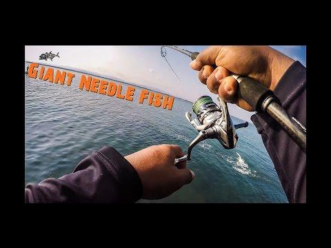 ตกปลาทะเล ตอน  ปลากระโดด โหด มาก Giant Needle fish.