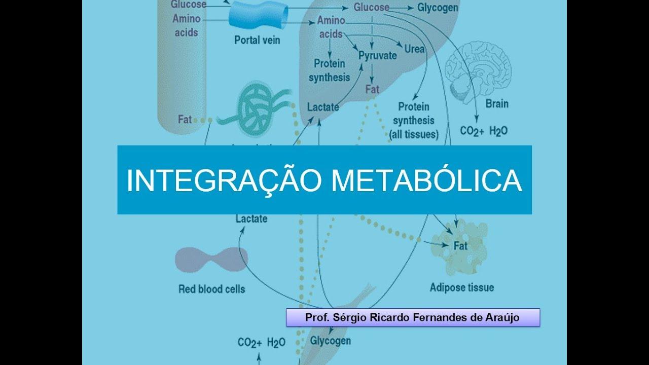 Curso de Bioquimica: Integração Metabólica - YouTube