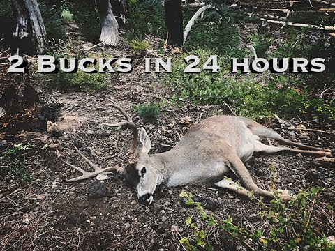 TWO HUGE BUCKS IN 24 HOURS ON CALIFORNIA PUBLIC LAND!!! || CACCIA OUTDOORS