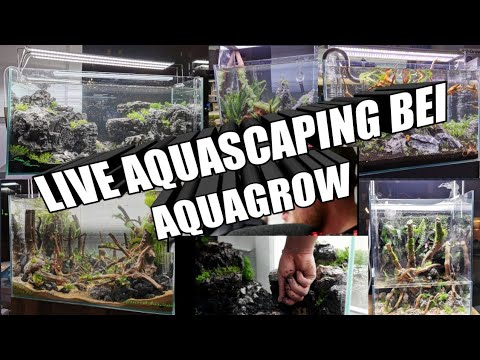 Aquascaping Shop Eröffnung & Live Aquascaping AquaGrow LED ...