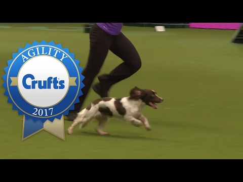 Thumbnail: Agility - Crufts Singles Final - Small, Medium and Large (Part 1) | Crufts 2017