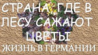 Русские в Германии.  Здесь в лесу сажают цветы(РУССКИЕ В ГЕРМАНИИ ЗАБЕРИТЕ ПОДАРОК! http://verabrustina.com/wppage/vpiar/ Русские в Германии. В лесу сажают цветы http://www.youtu..., 2015-03-16T16:00:01.000Z)