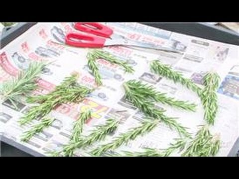 Herb Gardening : How to Dry Rosemary Leaves Only