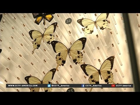 Shanghai Natural History Museum now open to public