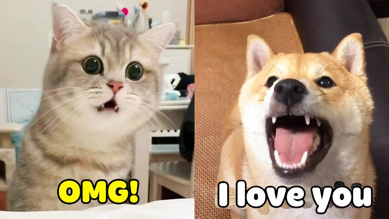 Try Not To be Surprised - Dogs and Cats Can Speak English Like Humans (2020)