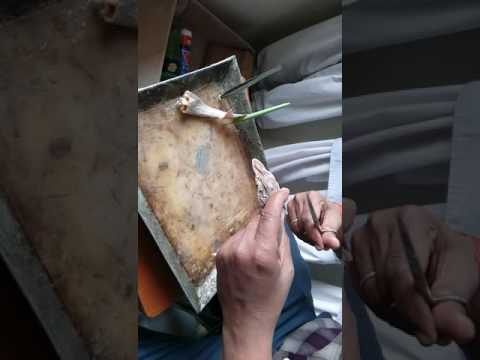 Disection Of Scoliodon By Dr. Kamlesh