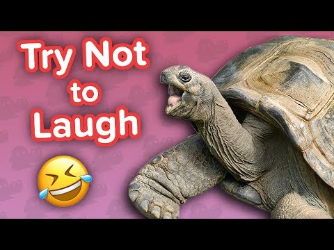 Try Not to Laugh Challenge: Tortoise Edition