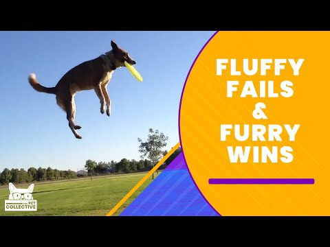 Fluffy Fails & Furry Wins