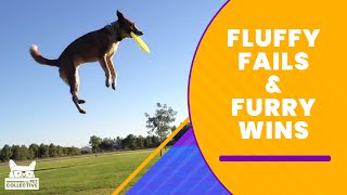 Fluffy Fails & Furry Wins | The Pet Collective