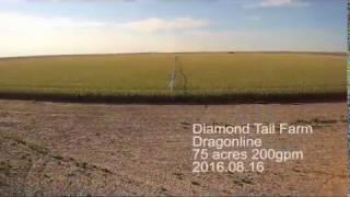Diamond Tail Farms - Featuring Dragon-Line