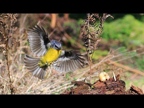 Bird Photography Tips : Next Level & beyond