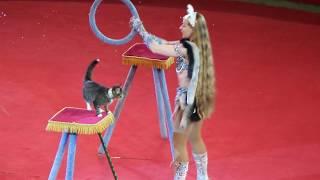 Кошки. Цирк. Ленивые кошки в цирке. Cats. Circus.Lazy circus cats.