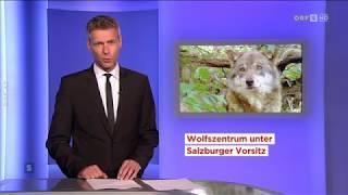 Wolfszentrum unter Salzburger Vorsitz ORF Salzburg heute