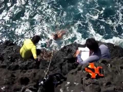 Northwestern Hawaiian Islands 2012 Intertidal -