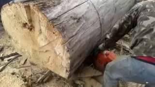Спил деревьев Киев (067) 447 52 21(, 2014-08-25T18:04:10.000Z)