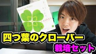 四つ葉のクローバー栽培セット!育ててみよう( ^ω^ ) 四つ葉のクローバー 検索動画 17