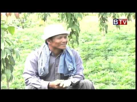 BTV  Khmer Agriculture News, ដំណាំស្បៃរឿងទេស