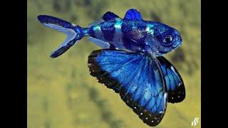 Необычные рыбки. Рыба бабочка