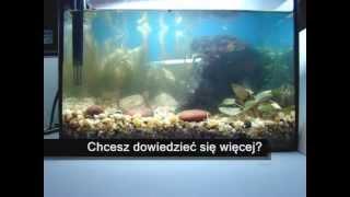 Zakładanie akwarium cz. 4.1 - Jak sadzić rośliny: rośliny drugiego planu z koszyczka