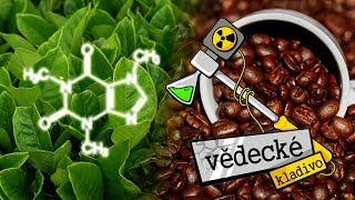 Kofein vs T(h)ein - Vědecké kladivo