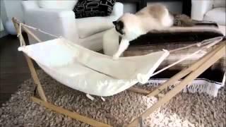 кот на гамаке! прикол!