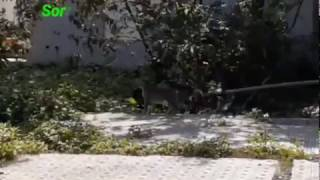 Two Cats Fighting in Our Yard