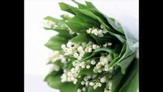 Beautiful bouquets/Красивые букеты