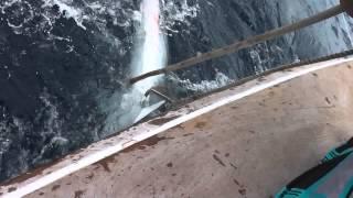 Охота на акулу  Маврикий 2012
