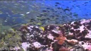 Life Aquatic - Fun Dive Trip - Gulf of Thailand / Koh Phangan / Koh Tao