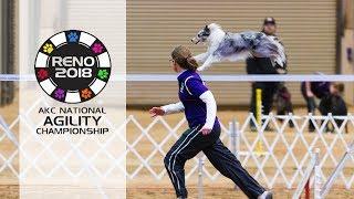 AKC 2018 National Agility Championship