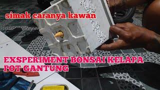 Exsperimen Bonsai Kelapa Pot Gantung Video Smotret Onlajn