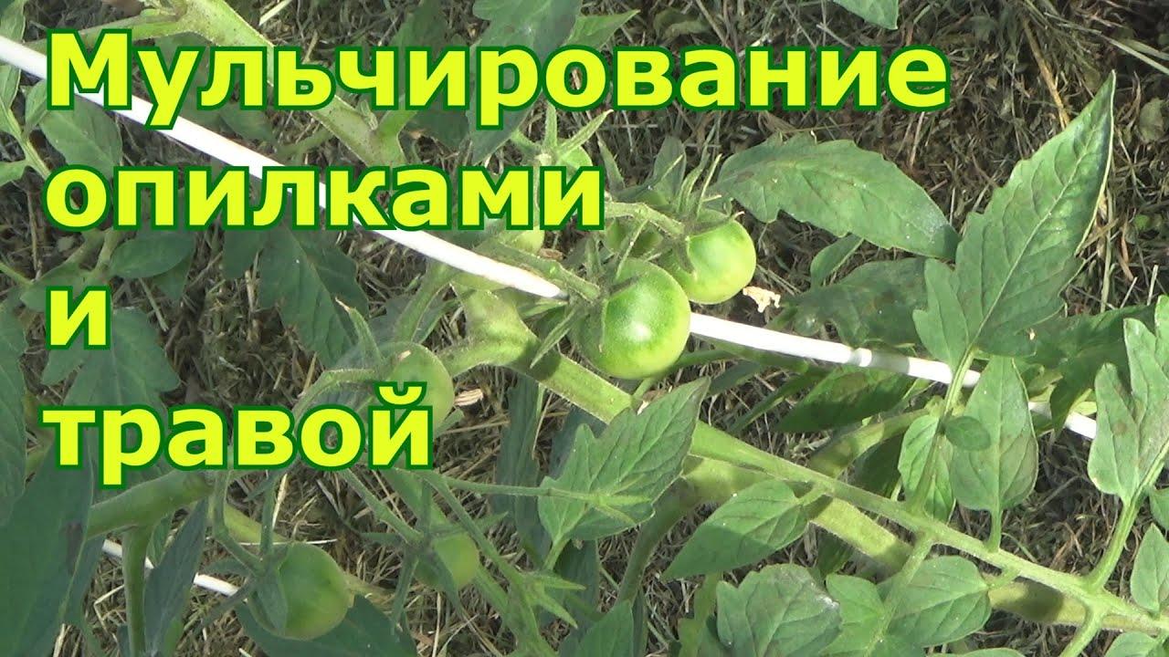 Как мульчировать грядки опилками и травой, чтобы была польза, а не вред для растений.