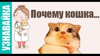 Почему кошка мурлыкает, кашляет и гадит. #Узнавайка.