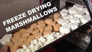 Freeze Drying Marshmallows