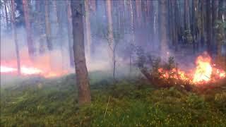 Groźny pożar lasu