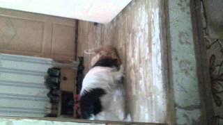 Накуренный кот насилует собаку!!!