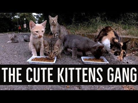 The cute kittens gang
