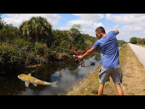 Bow-Fishing GIANT SILVER Expensive Fish TO Feed My Pond Monsters!!