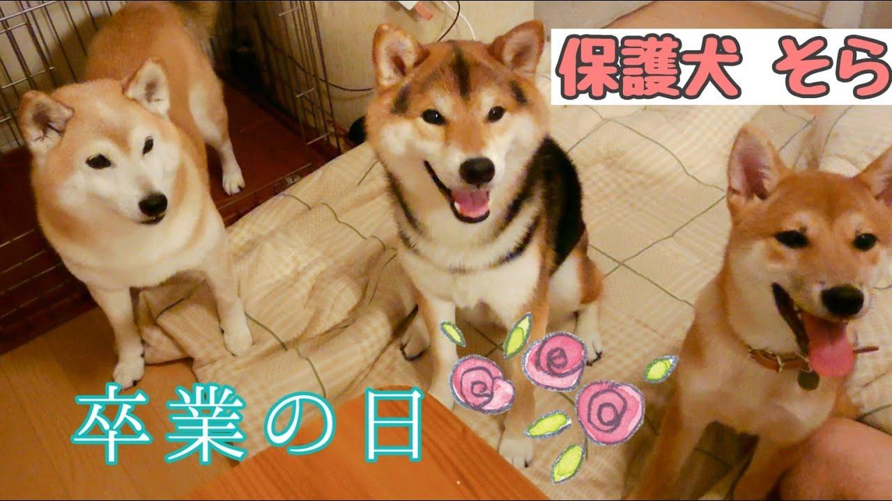 #保護犬 卒業の日