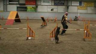 Zuma (elfinvale Legend) - Restoring My Faith In Dog Agility After The Previous Disaster...