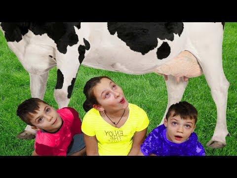 Вопрос: Как доить корову?