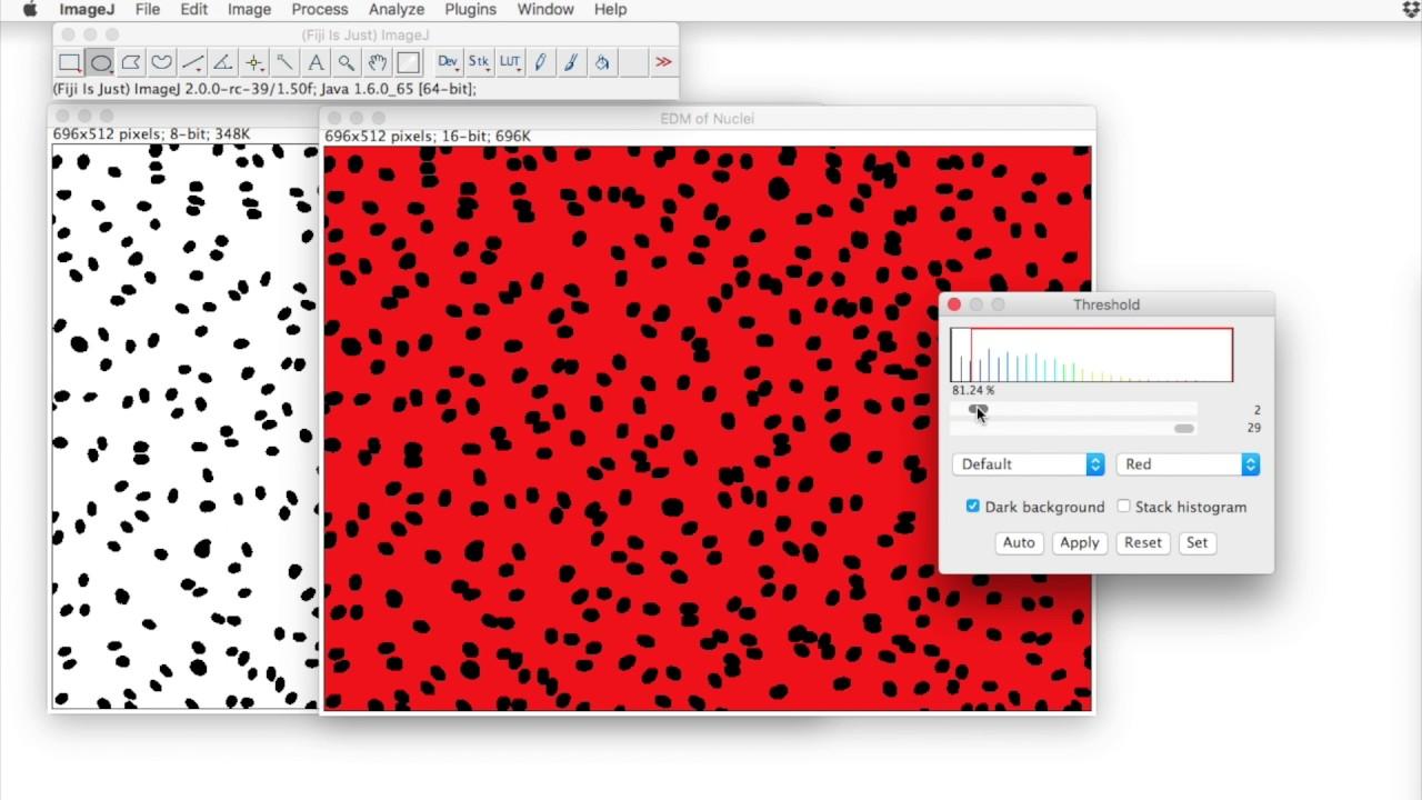 FIJI for Quantification: Euclidean Distance Measurements