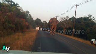 Elephant Blocks the Road as it Stomps Towards Cars