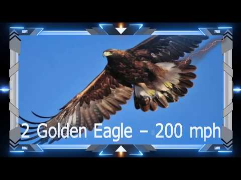 Top 10 Fastest Birds In The World by NEW TECH REMAIN