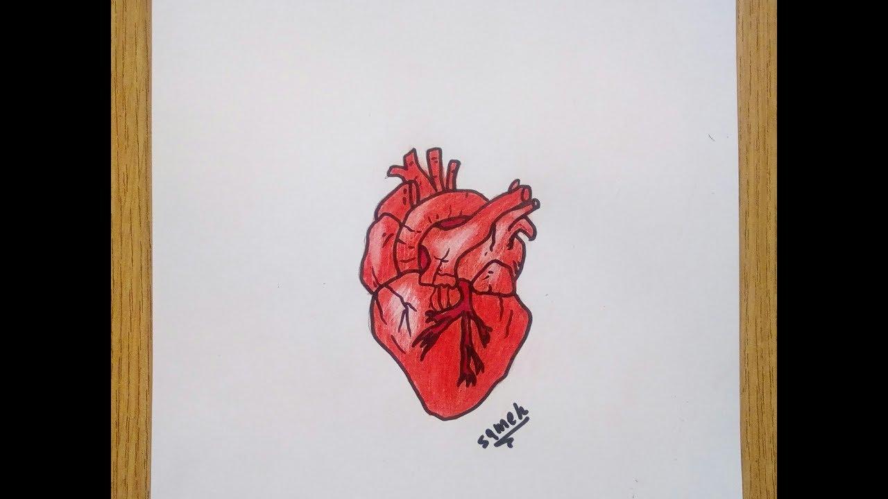 كيفية رسم قلب حقيقي تعليم الرسم للمبتدئين Youtube