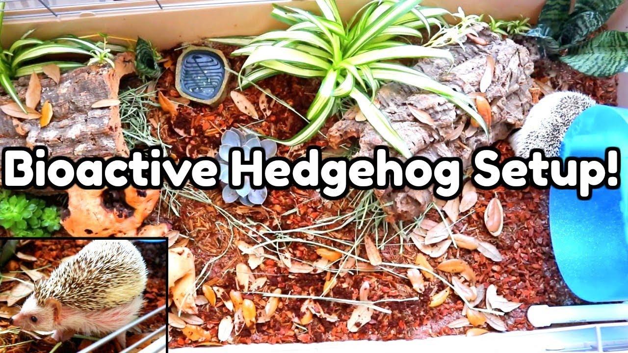 setting-up-a-bioactive-hedgehog-enclosure