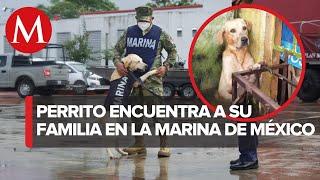 Cariñoso y agradecido; perrito rescatado de inundaciones en Tabasco se une a la Marina