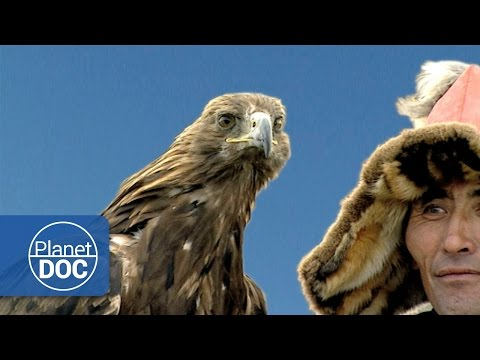 Genghis Khan. Hunting With Golden Eagles | Culture - Planet Doc Full Documentaries