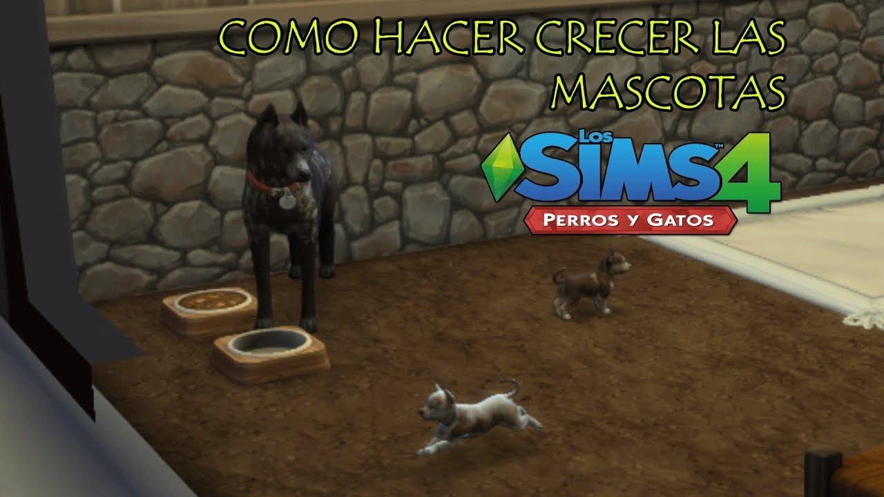 Como Hacer Crecer A Las Mascotas En Los Sims 4 Perros Y Gatos Youtube